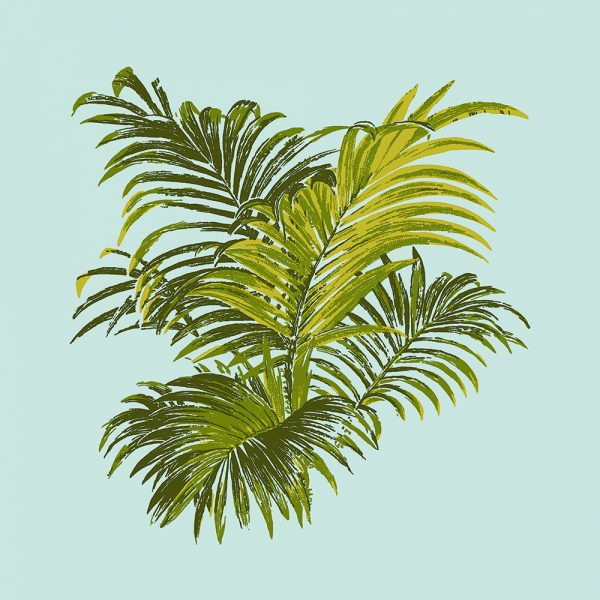 4 Colour Palm, Olive Springs